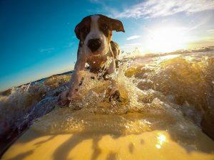 Gdzie warto pojechać na wakacje z psem
